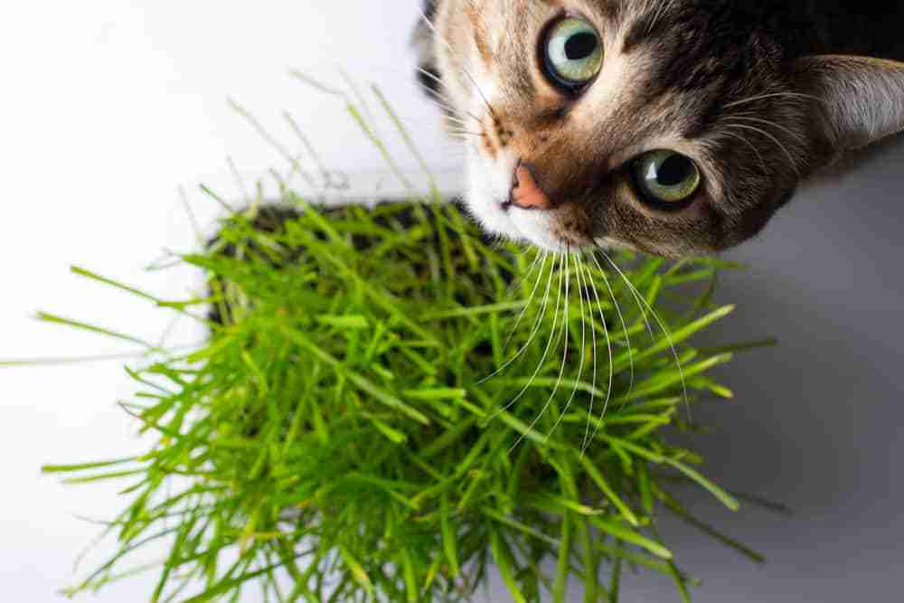 29 Houseplants Safe For Cats With Pictures