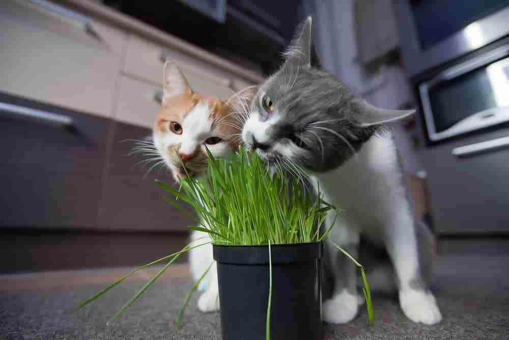 Best High Fiber Cat Food For Constipation - Wet, Dry ...