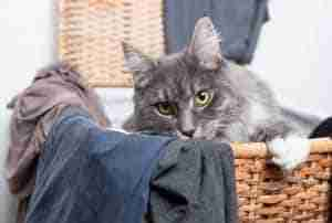 cat in laundry