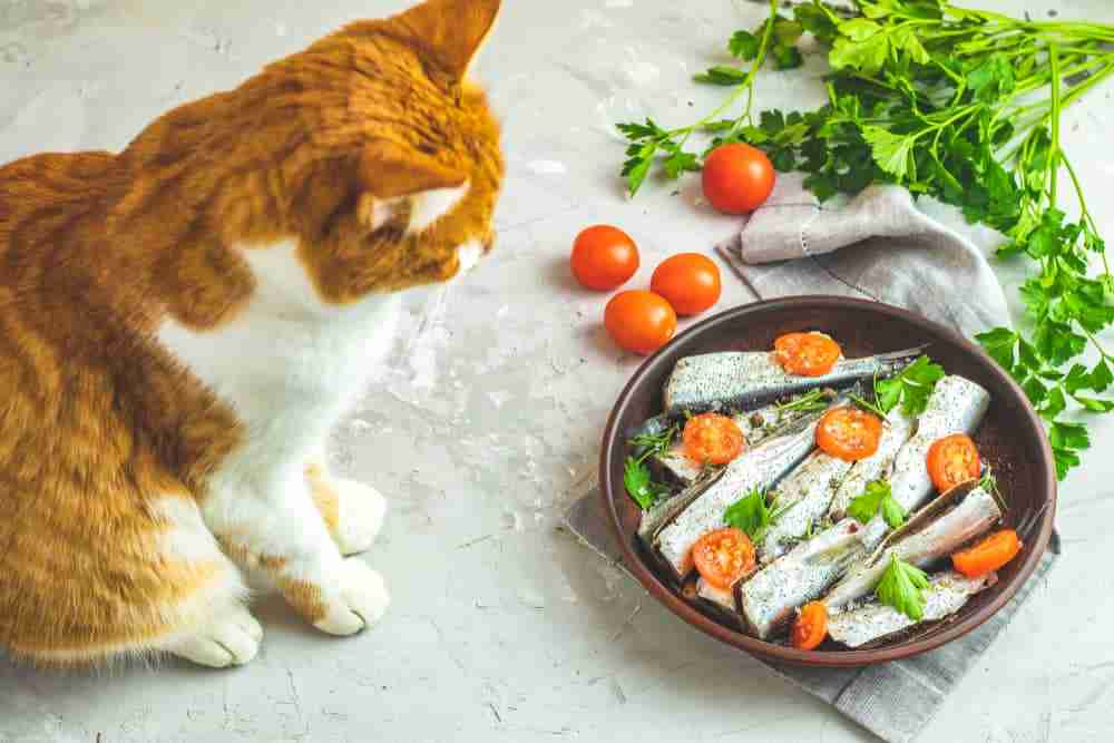 Can Cats Eat Sardines