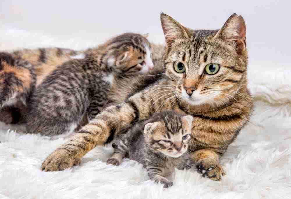 Cat Siblings And mother
