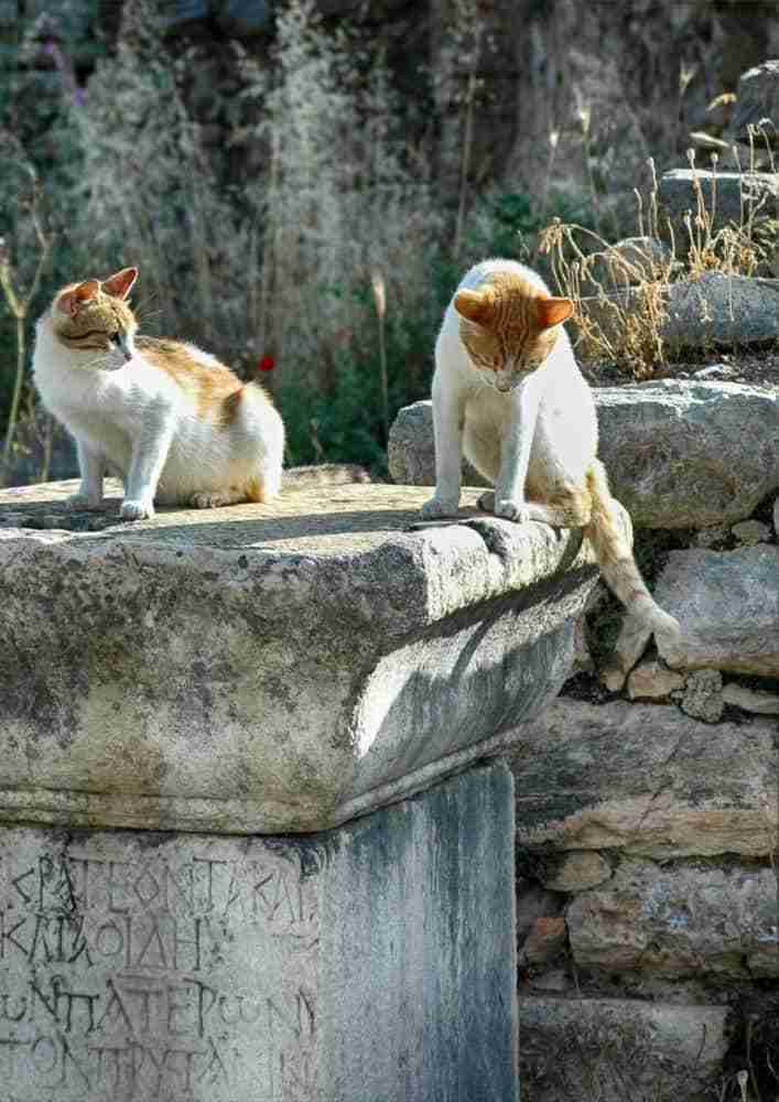 greek cats playing